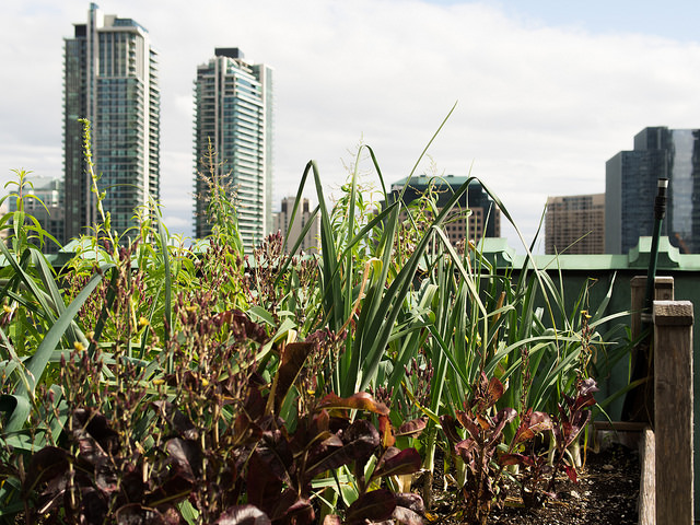 Royal_York_Rooftop_Garden_Toronto_14