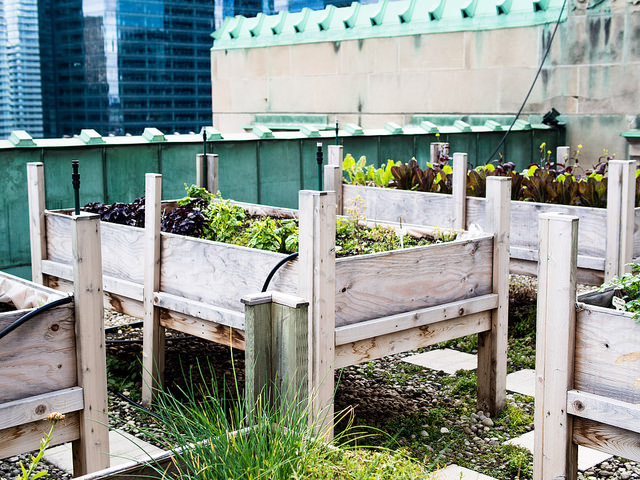 Royal_York_Rooftop_Garden_Toronto_7