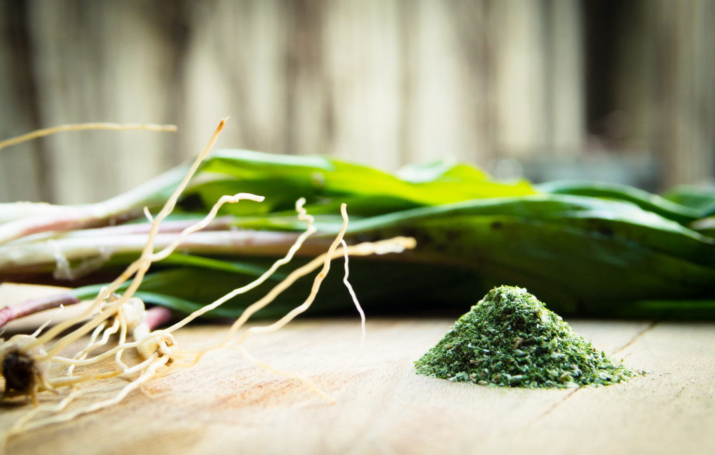 Wild Leek Powder Recipe (Dehydrator Recipe) aka Ramps Wild Leek recipe Ramp dehydrated